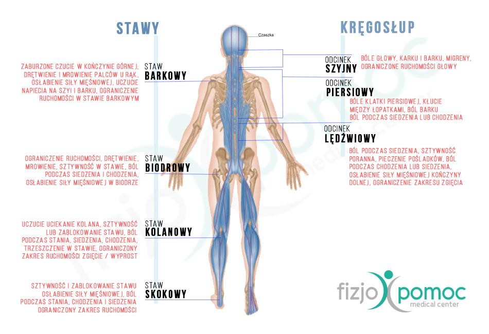Rehabilitacja - schemat odcinków kręgosłupa i stawów przy rehabilitacji